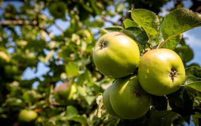 Have your Say on a Community Orchard